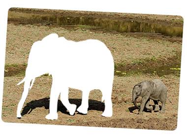 olifant380